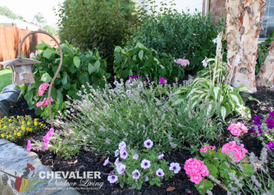 Perennial Garden with Annuals