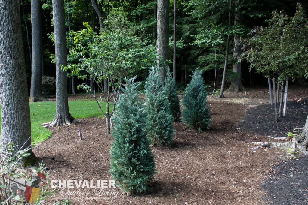 Tree Installation & Removal